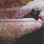 Speckles sleeping positions get weirder and weirder!